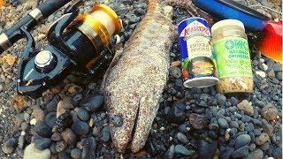 catch-n-cook-big-nasty-moray-eel