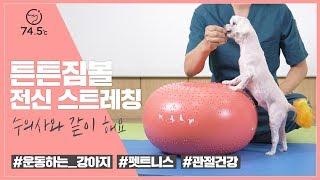 [튼튼짐볼] 강아지 전신스트레칭 / 집에서 하는 강아지…