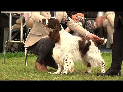 Southern Counties Dog Show 2017 - Gundog group FULL