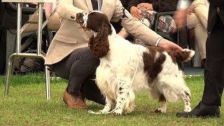 Southern Counties Dog Show 2017  Gundog group FULL