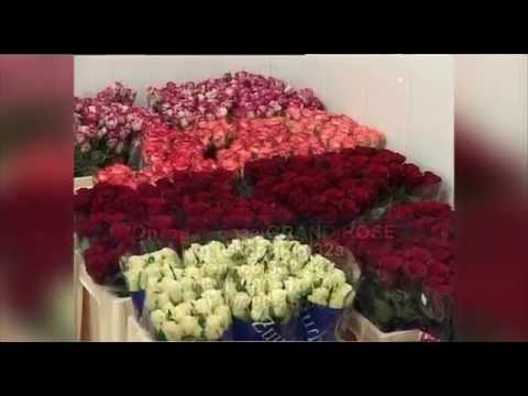 Grand Rose, цветы оптом
