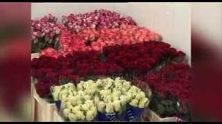 видео купить комнатные растения в Москве