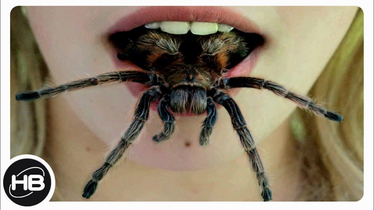 10 САМЫХ ОПАСНЫХ паукообразных СУЩЕСТВ В МИРЕ. Самые ...