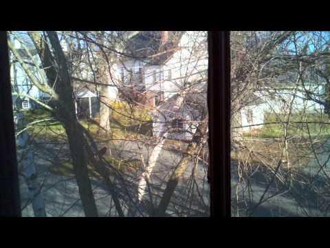 Bird bangin on window 2012-04-05_08-20-02_312