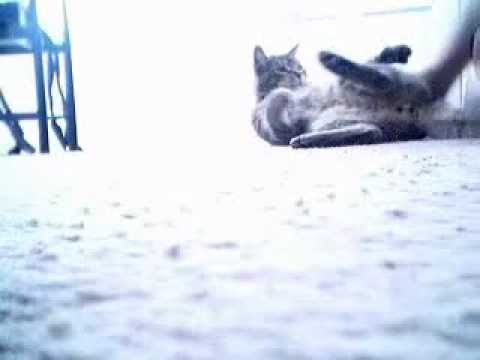 cat rolling on sides.AVI