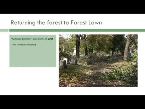 Returning the Forest to Forest Lawn: Tree Planting Strategies for Historic Landscapes