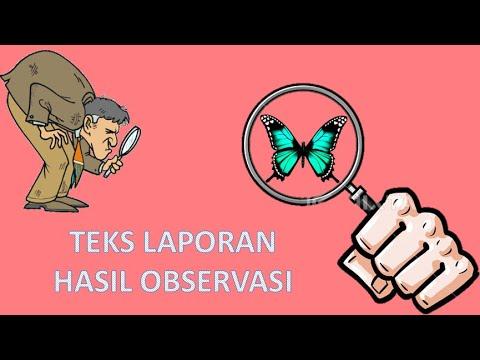 Video Teks Laporan Hasil Observasi Bahasa Indonesia Youtube