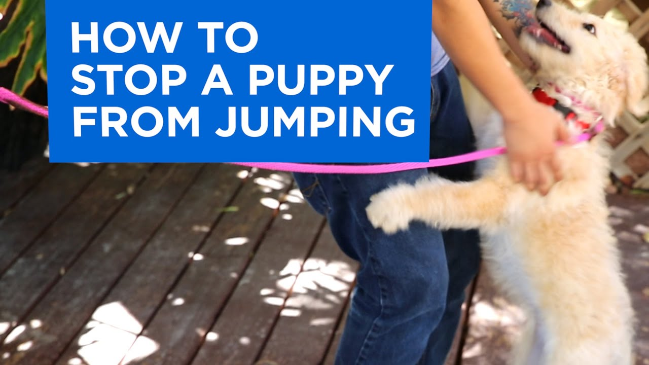 Puppy training tips for jumping