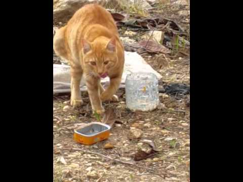 Smart cat eats by using its hand
