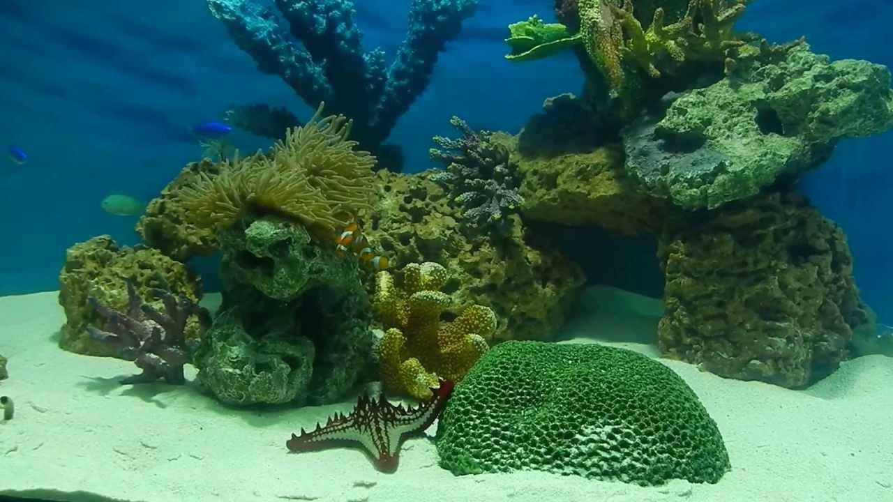 Fish aquarium in kurla - Fish Aquarium In Kurla