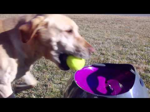 PetSafe® Automatic Ball Launcher is Fun! - YouTube