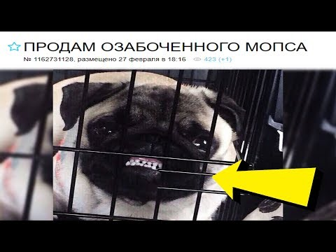 20 УПОРОТЫХ ОБЪЯВЛЕНИЙ С АВИТО // HeisenWhite