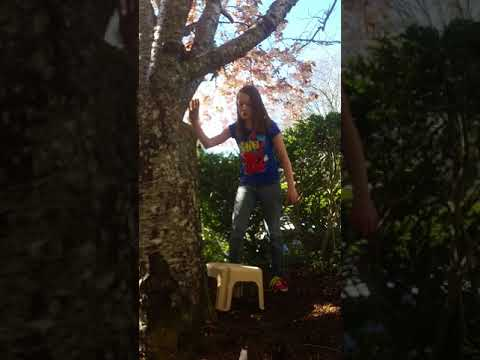How [Not] to Climb a Tree