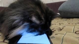 Кошка ловит мышку. Игра на планшет Для кошки.
