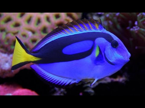 Top 10 most beautiful fish in the world have to see youtube for Best fish in the world