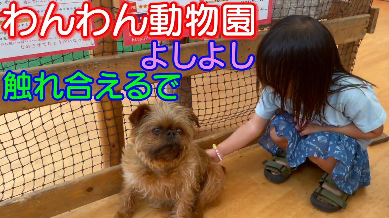 【わんわん動物園】2人とも犬に触れたかな?男女双子生後2歳6ヶ月The wonderful place where a dog can come in contact