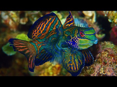 4K-View: Marine Life/Aqua Tapestry - UHD SlideShow - Gentle Instrumental Worship