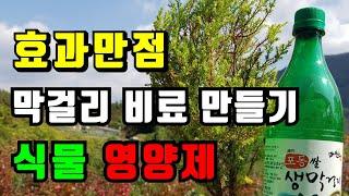 겨울화분영양제, 막걸리 천연비료 실내화초 비료 영양제 …