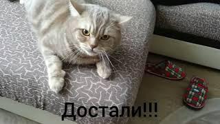 Кот говорит отойди ( 2 серия )