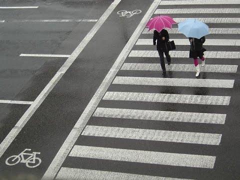 Пешеход всегда прав