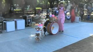 紫熊祭のアトラクション、「わんわん大サーカス」午後の部のラスト、樽...