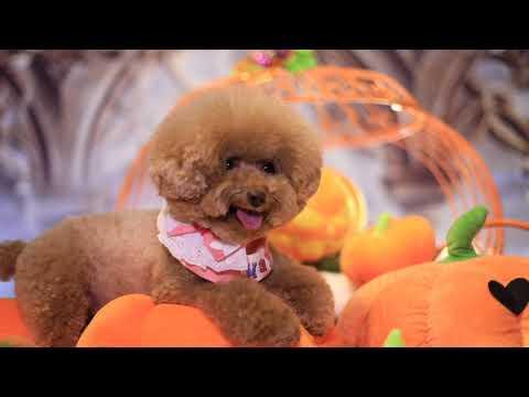 Halloween Day 2 @ Eva Kwan