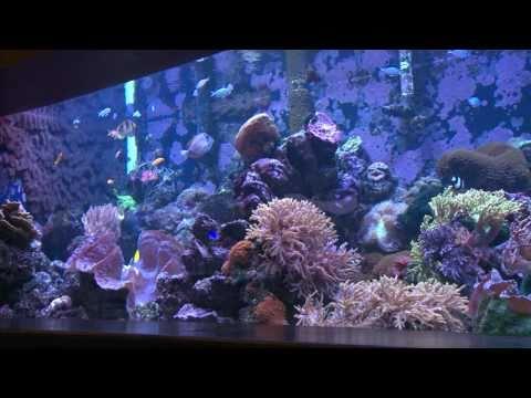 Explore Tulsa ~ OK Aquarium