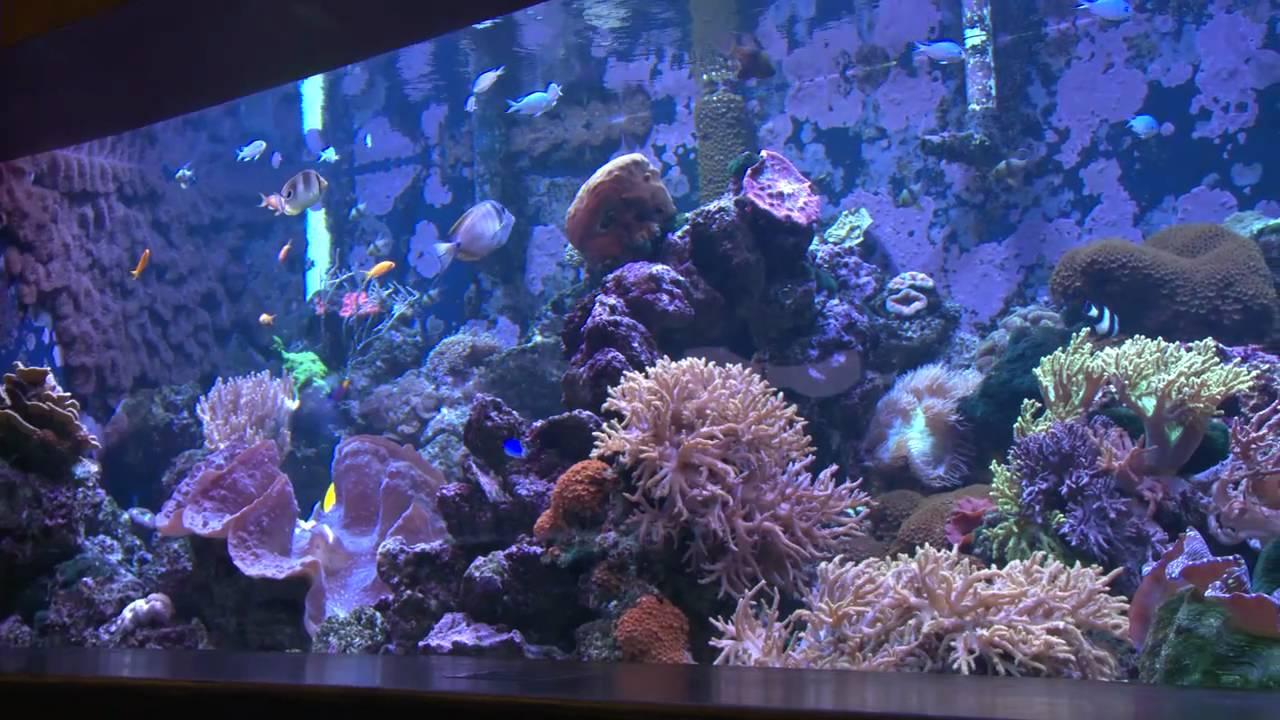 Explore Tulsa ~ OK Aquarium - YouTube
