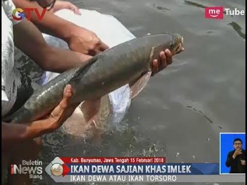 Wow!! Menjadi Makanan Khas Imlek, Satu Ikan Dewa Dijual Seharga Rp 1 Juta  BIS 1702