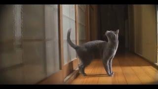 Кот стучит в дверь.Гениально:)