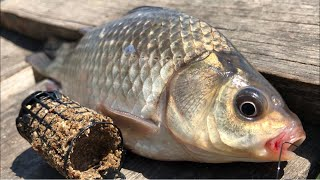 Рыбалка на фидер | ловля карася на фидер | фидер для начинающих | рыбалка на карася 2020