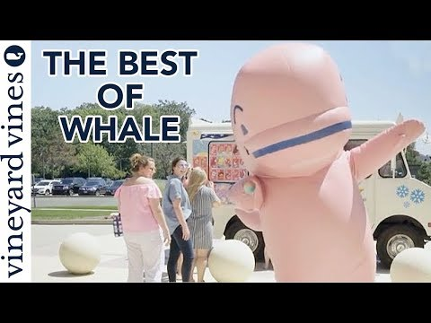 The Best of Whale Compilation | vineyard vines