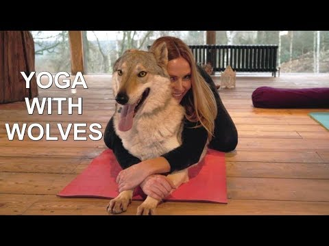 WOLF YOGA  - DOGA with dogs & wolves
