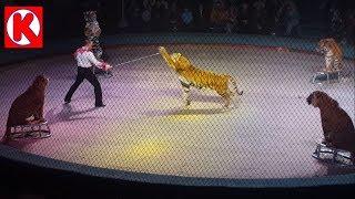Осторожно! Тигры! Идем в Цирк на Шоу Мстислава Запашного на канале Agent K