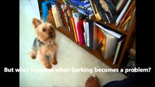 Funny Yorkies video - I love Yorkies temperament except barking!