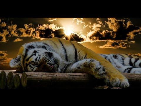 Guten Morgen Tiger