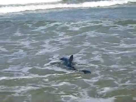 Пляж и акулы