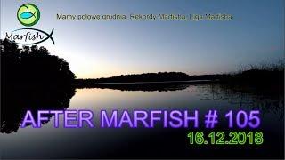 After Marfish # 105, Mamy połowę grudnia. Rekordy Marfisha, Liga Marfisha Live chat. - Na żywo