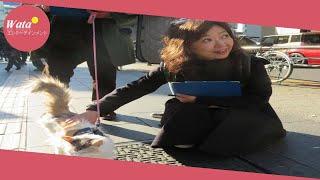 女優浅田美代子(61)が23日、都内で、動物愛護法の改正を求める街...