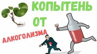 копытень европейский от алкоголизма, как приготовить, польза и вред травы