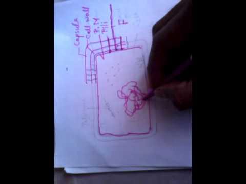 BSc I Sem Bot unit 1 in Hindi Prokaryotes and cell