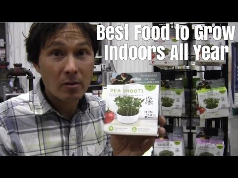 Best Food to Grow Indoors at Home Any Time of Year