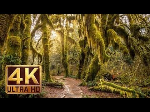 The Best Documentary Ever - 4K, Hoh Rain Forest Nature Relaxation Video