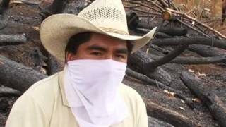 Mexicans Fighting To Save Their Forests -- From Cartels