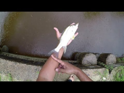 SNOOK FISHING TIPS! - Inshore Fishing - Trinidad and Tobago, Caribbean