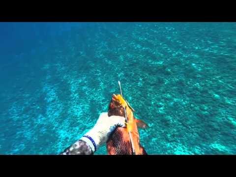 Spearfishing 2016 Raiatea II