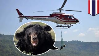 Bear rescue: Epic fail as Thai wildlife officials accidentally drop bear during airlift - TomoNews