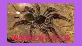 昆蟲大部分都是小小的,感覺沒什恐怖,但有的昆蟲最大可以大到讓人驚訝...