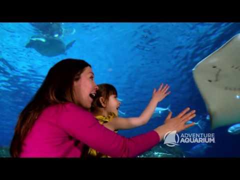 2017 Adventure Aquarium Commercial :30