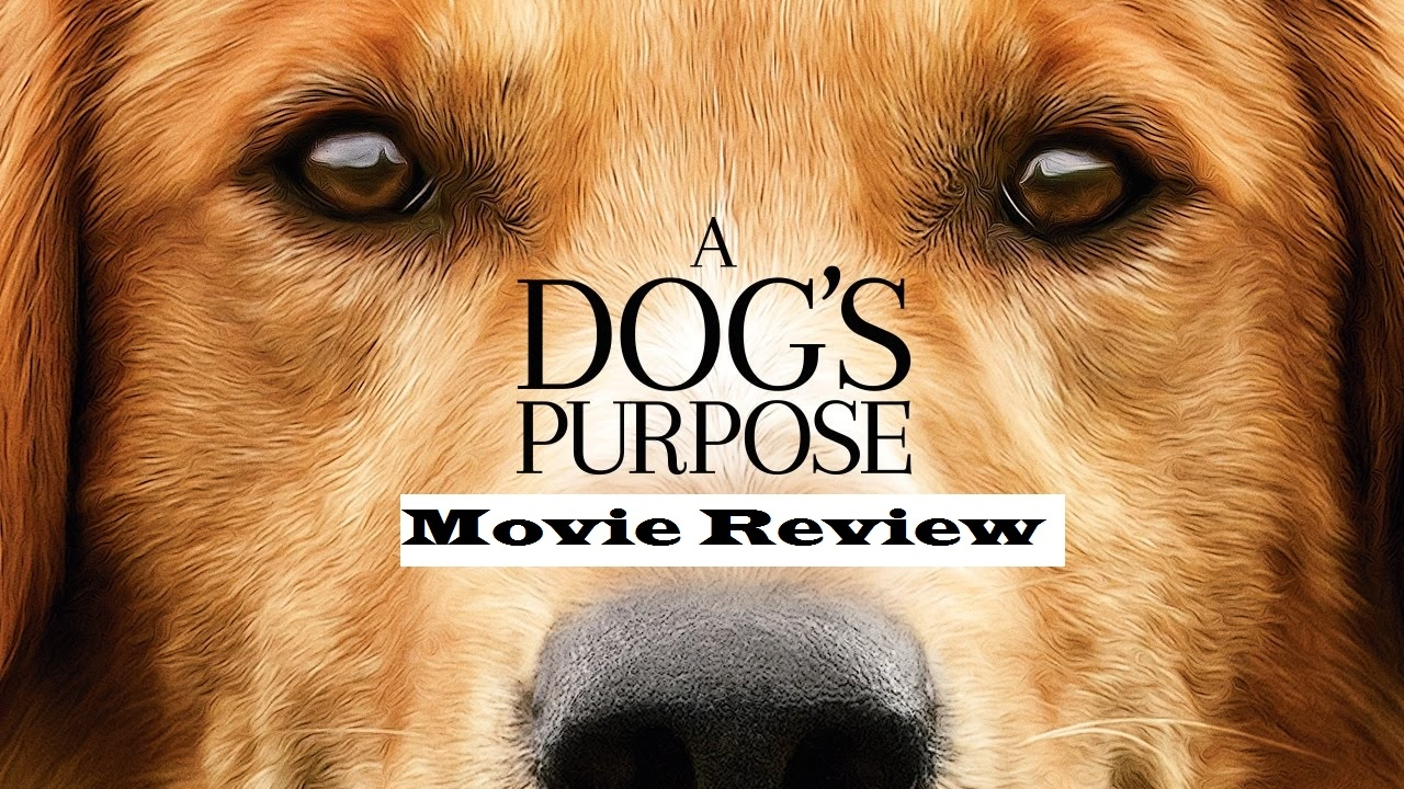 A Dog S Purpose Review Youtube